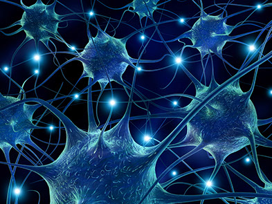 Image result for Neuropathways